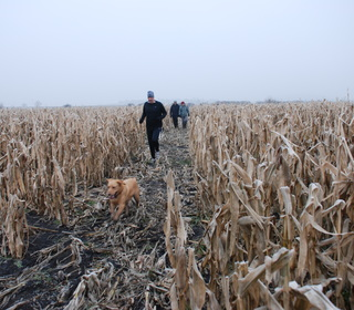 Dog, jogger, corn and villagers.