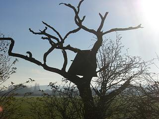 Barn owl box in the crooked tree