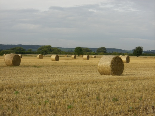 Harvest time down on the moors.