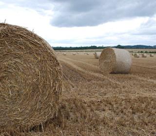 Bringing in the wheat. Facing north to Ruddington.
