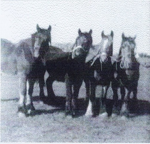 The last horses used at Bonsers