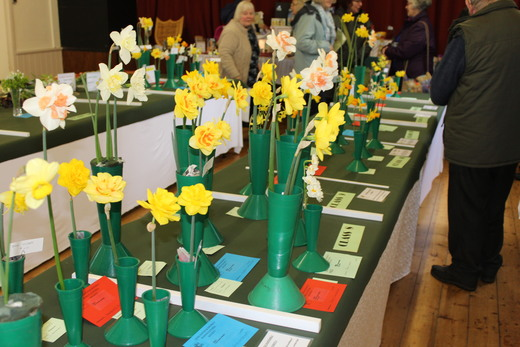 Selection of Narcissi