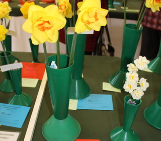 Division 4 Double Narcissus Winner Peter Treasaden