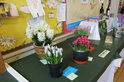 Exhibits grown from Bulbs Class24