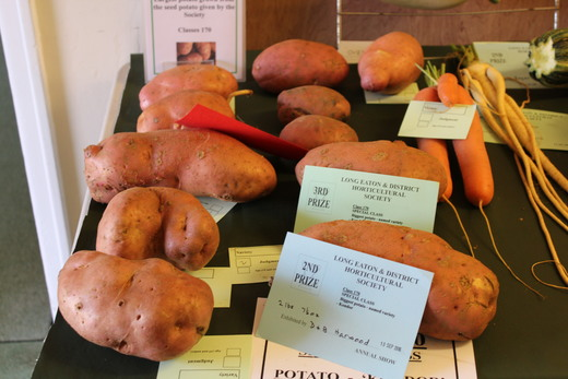 Kondor potato exhibits Class 170. Winner D & B Harwood