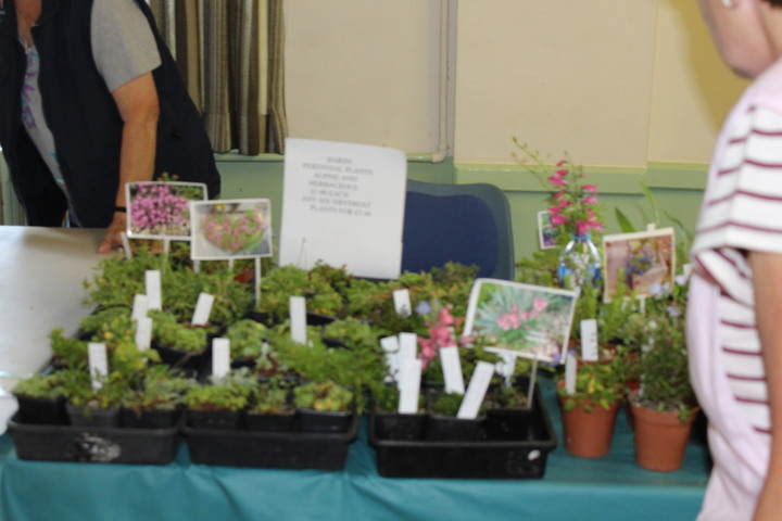 Alpines for Sale on Plant Stall
