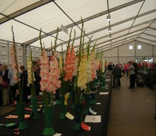 Gladioli Exhibits