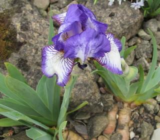 Iris Ann Elizabeth