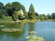 Water Lily Lake at Burnby Hall Gardens