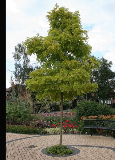 Tree planted in Long Eaton Library Gardens to celebrate our 90th anniversary