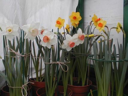 daffs greenhouse