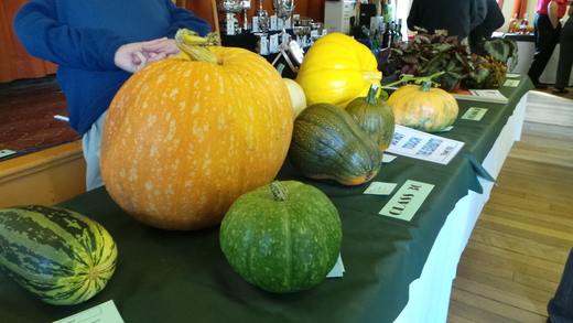 PUMPKINS-MARROWS-SQUASH