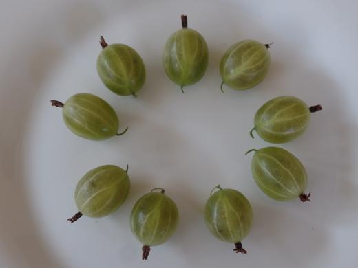 Gooseberries from Susan (Long Eaton)