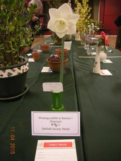 Best Bloom in Show by Lyndon Clements