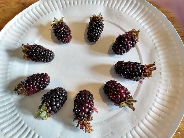 Blackberries from Phil (Sandiacre)