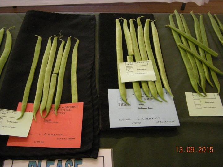 Runner Beans Exhibited by Lyndon Clements