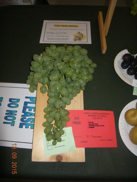 Grapes Exhibited by David Jamson