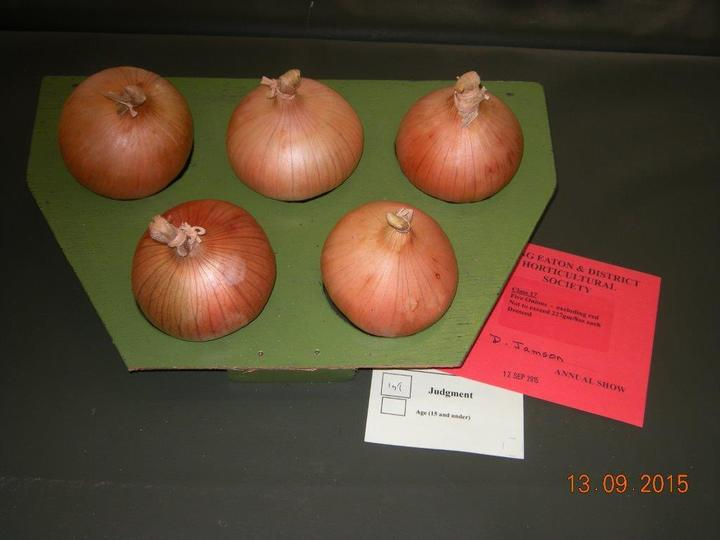 Onions over 250gms Exhibited by David Jamson
