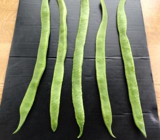 Runner Beans from Phil (Sandiacre)