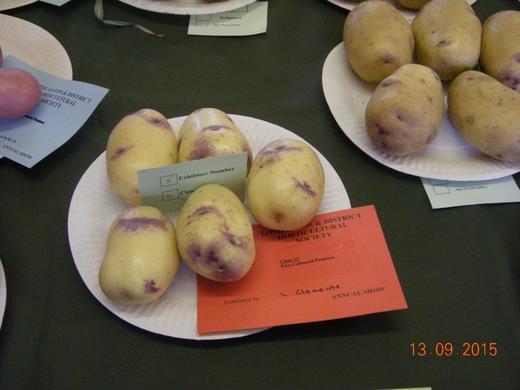 "Coloured Potato ""KESTREL"" Exhibited by Lyndon Clements"