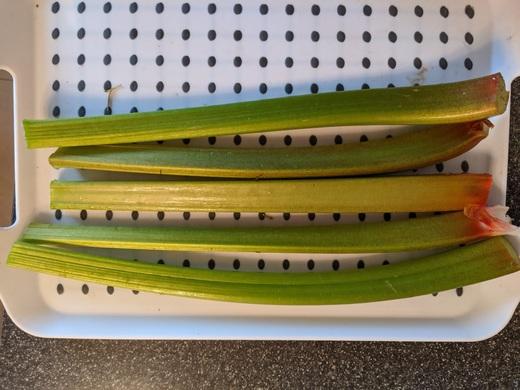 Rhubarb from Dan (Long Eaton)