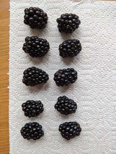 Blackberries from Dan (Long Eaton)