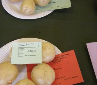 """White Potato """"BUTE"""" Exhibited by Lyndon Clements"""