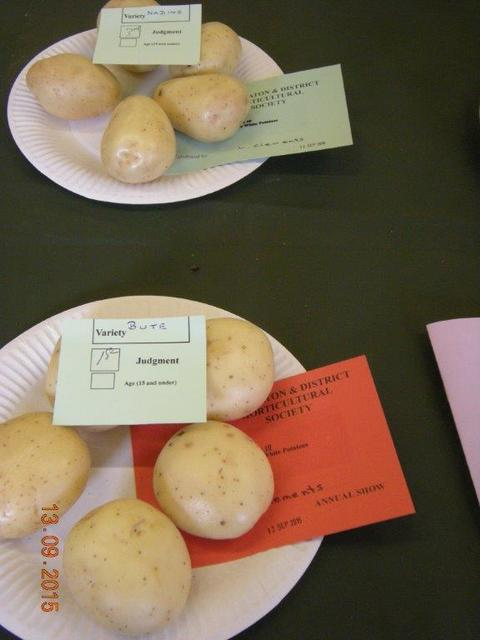 "White Potato ""BUTE"" Exhibited by Lyndon Clements"