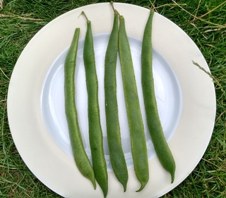 Runner Beans from Sue (Long Eaton)