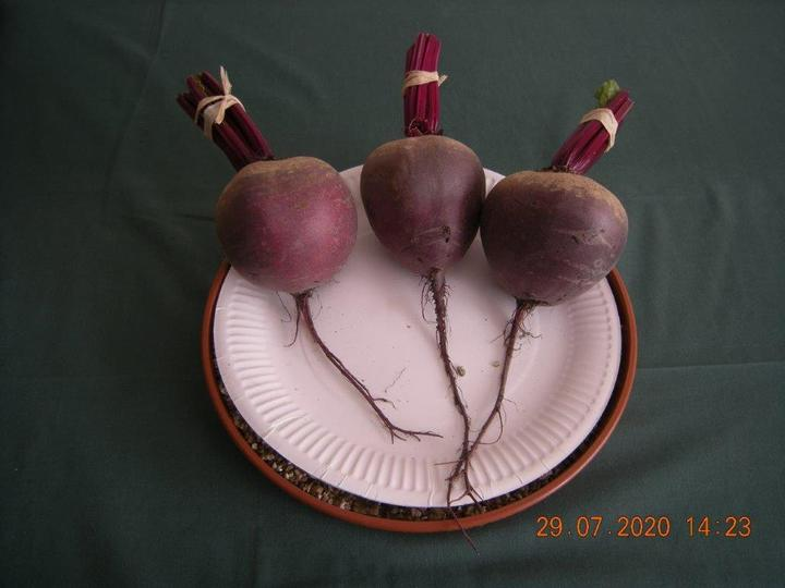 Beetroot Red Ace from Lyndon (Long Eaton)