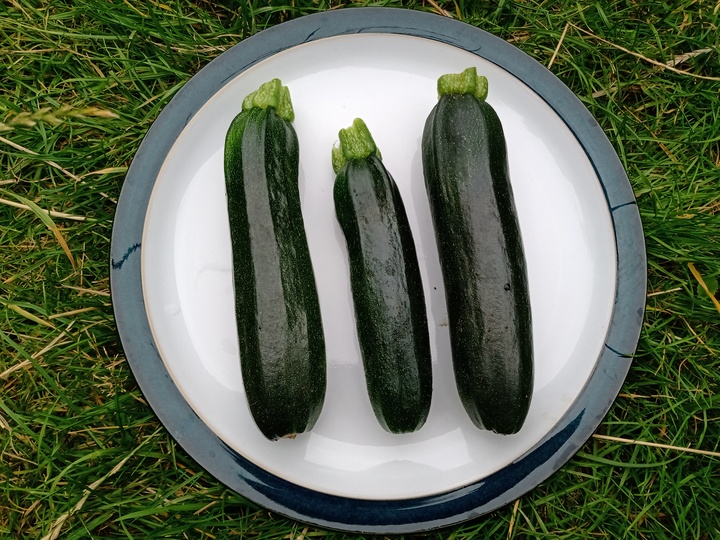 Courgettes from Lucy (Long Eaton)