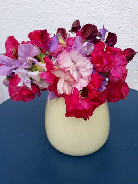 Sweet Peas from Maureen (Long Eaton)