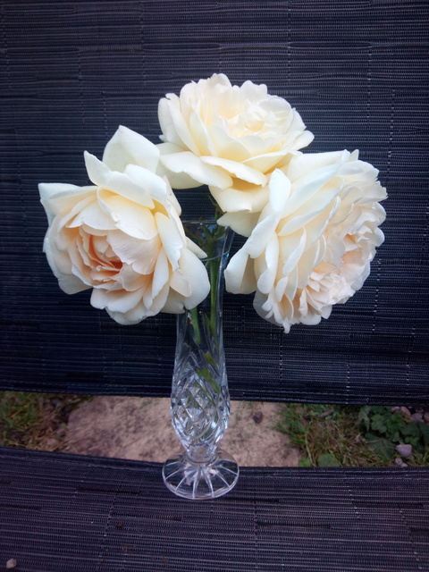 Three Rose Blooms from Margaret (Sawley)