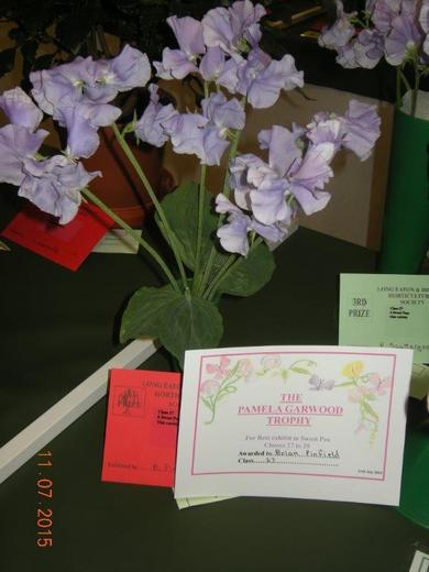 Sweet Peas Exhibited by Brian Pinfield