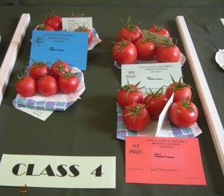 Tomatoes Exhibited by John Stevenson