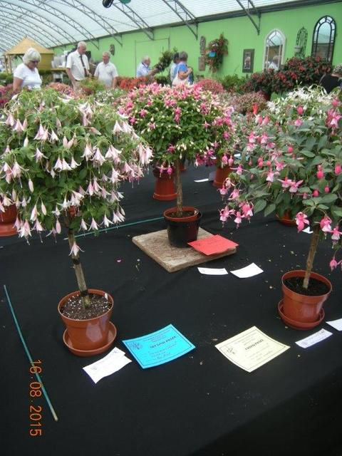 A View of the National Fuchsia Show Palmers Garden Centre Ullesthorpe August 2015