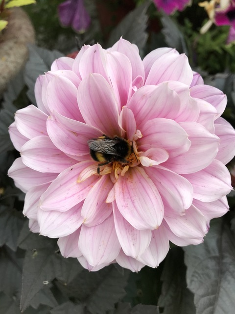 Bees alive! from Maria