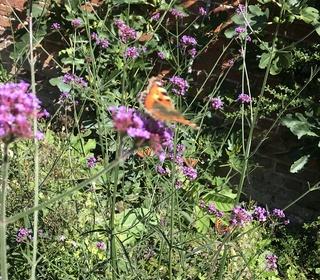 Butterflies from Maria