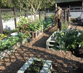 Allotments looking great I'm very pleased with how it's coming along