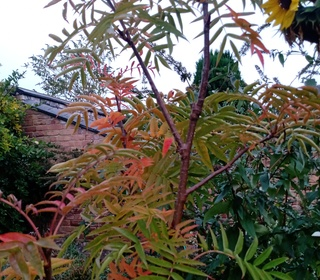 Autumn Colours form Lucy